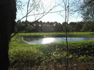 Salamanderpoel Beatrixpark